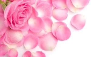 1000-petalas-de-rosas-cor-rosa-artificiais-