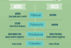 aedes_0
