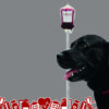 cachorro-doando-sangue-hemovet