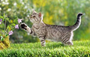 gatobrincando