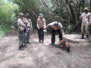 Treinamento de cães Fotos: divulgação