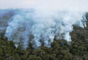 Incêndio no Pantanal. Foto: divulgação